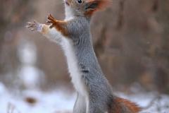 vjeverica-5