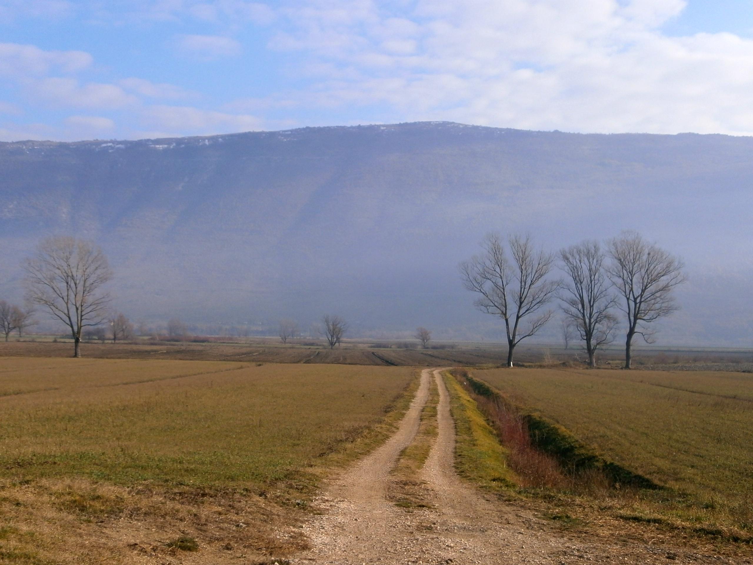 Čepićko polje